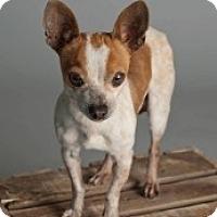 Adopt A Pet :: Elwood - Mesa, AZ
