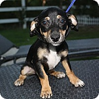 Adopt A Pet :: Matty - Sherman Oaks, CA