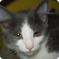 Adopt A Pet :: Pudge - Medina, OH