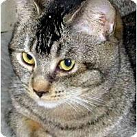 Adopt A Pet :: Jolie (formerly Boogie) - Davis, CA