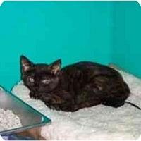Adopt A Pet :: Tortigirl - Secaucus, NJ