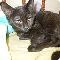 Adopt A Pet :: Petunia - Medina, OH