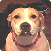 Adopt A Pet :: Mandy *COURTESY POSTING* - Romeoville, IL