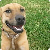 Adopt A Pet :: #477-14 @ Animal Shelter - Zanesville, OH