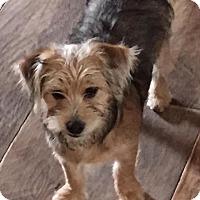 Adopt A Pet :: TABATHA - Mission Viejo, CA