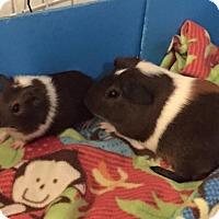 Adopt A Pet :: Johnny & Jumper - Fullerton, CA