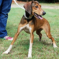 Adopt A Pet :: Allie - Barnwell, SC