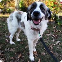 Adopt A Pet :: Duchess - Kyle, TX