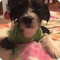 Adopt A Pet :: Fantasia  adoption pending - Manchester, CT