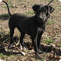 Adopt A Pet :: Tinsel - Bedminster, NJ