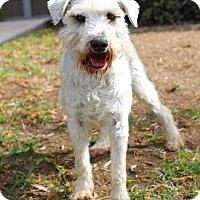 Adopt A Pet :: Reebok - San Diego, CA