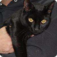 Adopt A Pet :: Oliver - Brooklyn, NY