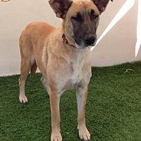 Adopt A Pet :: Brenda - San Diego, CA