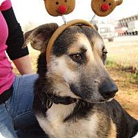 Adopt A Pet :: Sheba PENDING - Westport, CT