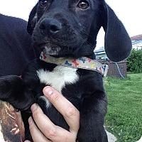 Adopt A Pet :: Dan - Joliet, IL