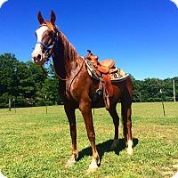 Adopt A Pet :: Samson - Centerville, TN