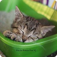 Adopt A Pet :: Teagan - Shrewsbury, NJ