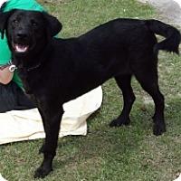 Adopt A Pet :: ROVER - Albany, NY