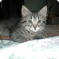 Adopt A Pet :: Lulu - Arlington, VA