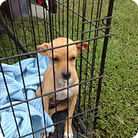 Adopt A Pet :: Maggie - Mexia, TX