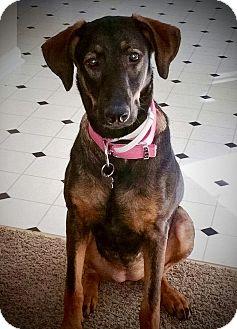 German Shepherd Dog Mix Dog for adoption in Woodstock, Georgia - Athena