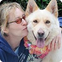 Samoyed/German Shepherd Dog Mix Dog for adoption in LA, California - Clementine