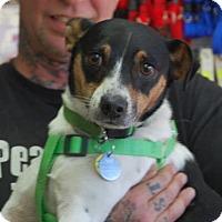Adopt A Pet :: Jackson - Brooklyn, NY