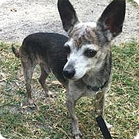 Adopt A Pet :: Charlie Brown - Boca Raton, FL