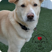 Adopt A Pet :: Tanner - Youngwood, PA