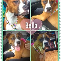 Adopt A Pet :: Bella - Sharon Center, OH