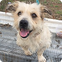 Adopt A Pet :: Stuart - Vancouver, BC