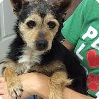 Adopt A Pet :: Spencer - Centerville, GA