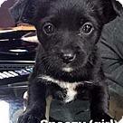 Adopt A Pet :: Seven Dwarfs Sneezy