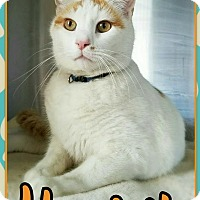 Adopt A Pet :: Harry - Edwards AFB, CA