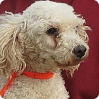 Adopt A Pet :: Bruce - Greenville, RI