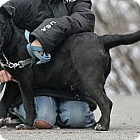 Adopt A Pet :: Mendel - Spring City, PA