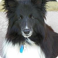 Adopt A Pet :: Draco - Charlottesville, VA