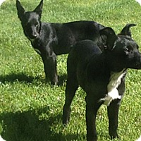 Adopt A Pet :: Grace - Greeley, CO