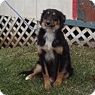 Adopt A Pet :: Winni
