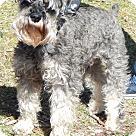 Adopt A Pet :: Moby (14 lbs)