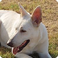 Adopt A Pet :: Dakota - Dripping Springs, TX