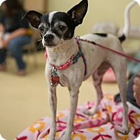 Adopt A Pet :: Daisy - Grass Valley, CA