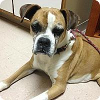 Adopt A Pet :: Ava - Brentwood, TN