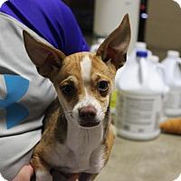Adopt A Pet :: Lindsey - Brattleboro, VT