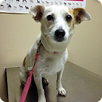 Adopt A Pet :: A321178  Lady - San Antonio, TX