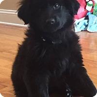 Adopt A Pet :: Lilac - New Oxford, PA