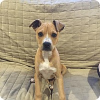 Adopt A Pet :: Carly - Flemington, NJ