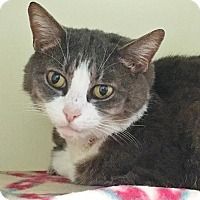 Adopt A Pet :: Mia - Salisbury, MA