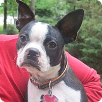 Adopt A Pet :: Chubbs - Harrisonburg, VA