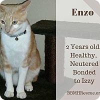 Adopt A Pet :: Enzo - Temecula, CA